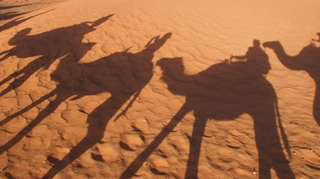 wielbłąd : Riding Camels on Zagora Desert in Morocco, Africa