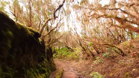 laur : Walking through Anaga Forest on Tenerife, Canary Islands, Spain