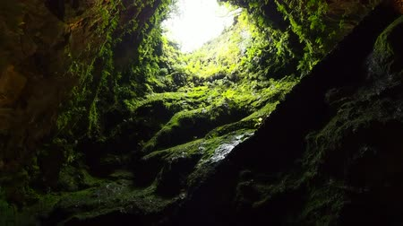 azorean : The Algar do Carvao - volcanic vent located in the center of the island of Terceira, Azores, Portugal