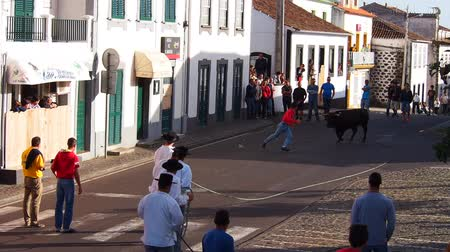 azorean : Tourada a corda – Bullfighting on a rope in Sao Mateus da Calheta on Terceira Island, Azores, Portugal