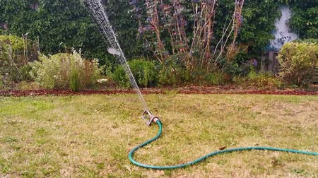 окропляет : watering the grass lawn with an automatic garden sprayer, close up of a water sprinkler, spraying water in the backyard