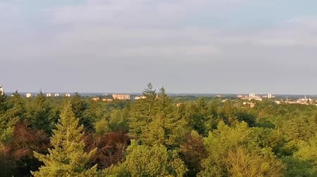 forest skyline with view on Apeldoorn city, popular Dutch town, The Netherlands