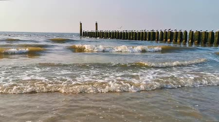 invasive : Waves in the sea and seagulls on wooden poles, The beach of domburg, Zeeland, The netherlands, Nature background video