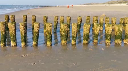 weathered wooden poles at the beach of domburg, The Netherlands Vídeos