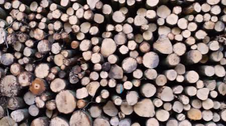 stocked : moving motion of a pile of cut down tree trunks, deforestation and forest upkeep, lumbered wood background