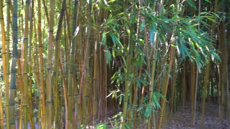 brotos : bamboo trunks in panning motion, tropical garden background