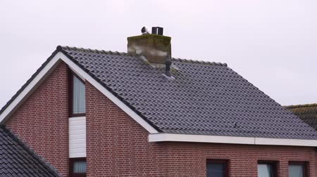baca : Smoking chimney on a rooftop, Dutch architecture, Heating the house Stok Video