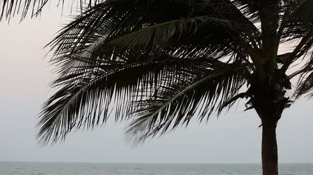 strong winds blow through a coconut tree at the beach