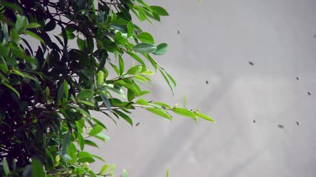 wasp : little bee flying over green branches of trees Stock Footage