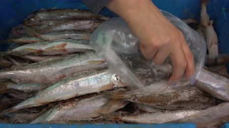 stříbřitý : Close-up hand shows to a shopper frozen smelt fish on the market to ensure quality and goodness of the product. Concept: healthy food, delicious, fish market, Asian cuisine.