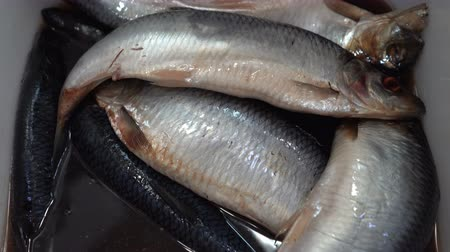 showcase : Close-up zoom in view of salted pacific herring fish have bluish-green back, silver-white sides and bellies, with oily flesh. Marinated ocean in a fish market.