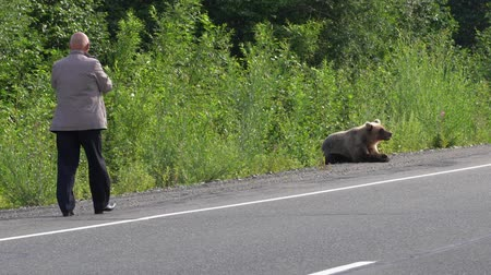 arctos : Male walking to extremely dangerous distance to hungry brown bear