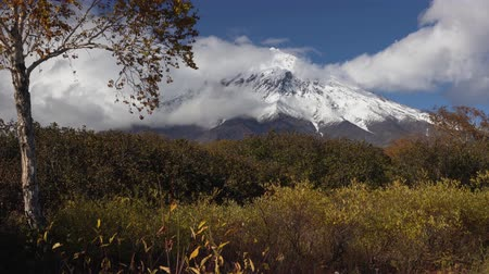 snowcapped : Beautiful mountain landscape of Kamchatka Peninsula, autumn view of cone active Koryak Volcano, yellow-orange trees in forest at foot of volcanic massif. Concept: time for hiking, climbing, traveling.