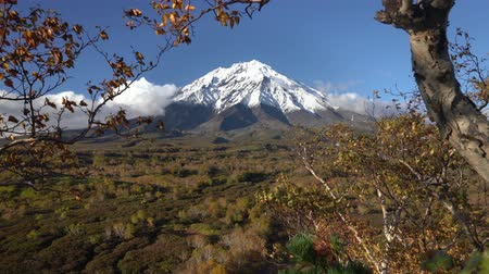 snowcapped : Beautiful volcanic landscape of Kamchatka Peninsula, autumn hand covered view of cone active Koryak Volcano, yellow-orange trees in forest at foot of mountain massif. Concept: traveling, hiking, climbing Stock Footage