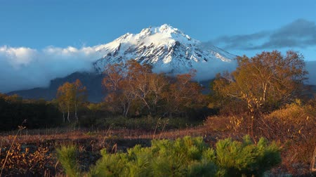 snowcapped : Stunning volcanic landscape of Kamchatka Peninsula, autumn view of cone active Koryak Volcano, yellow-orange trees in forest at foot of mountain massif. Concept: time for climbing, hiking, traveling