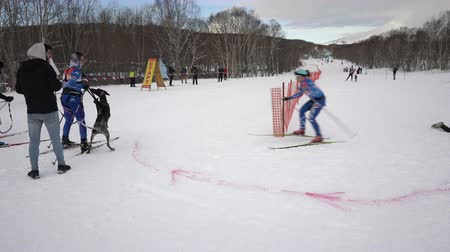 uzak : KAMCHATKA PENINSULA, RUSSIAN FAR EAST - FEB 2, 2019: Relay skijoring race competitions - Open Team Championship of Petropavlovsk-Kamchatsky City in winter sports mushing disciplines - skijoring racing Stok Video