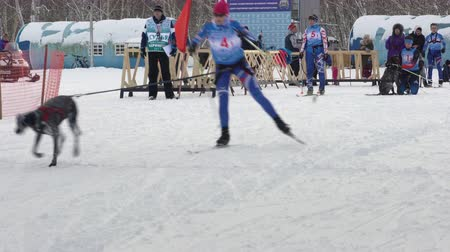 staffetta : PETROPAVLOVSK KAMCHATSKY CITY, KAMCHATKA PENINSULA, RUSSIAN FAR EAST - FEB 2, 2019: Relay skijoring race competitions - Open Team Championship in winter sports mushing disciplines - skijoring racing