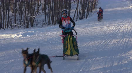 mushing : KAMCHATKA PENINSULA, RUSSIAN FAR EAST - FEBRUARY 2, 2019: Relay sled dog racing competitions - Open Team Kids Championship of Petropavlovsk-Kamchatsky City in winter sports mushing disciplines. Stock Footage