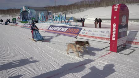 そり : PETROPAVLOVSK KAMCHATSKY CITY, KAMCHATKA, RUSSIAN FAR EAST - FEBRUARY 21, 2019: Kamchatka Kids Competitions Dog Sled Race Dyulin Beringia. Running dog sled young musher through stadium.