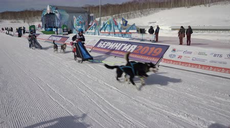 mushing : PETROPAVLOVSK KAMCHATSKY CITY, KAMCHATKA PENINSULA, RUSSIAN FAR EAST - FEBRUARY 21, 2019: Running dog sled young musher through stadium. Kamchatka Kids Competitions Dog Sled Race Dyulin Beringia.