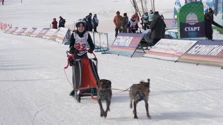 mush : PETROPAVLOVSK KAMCHATSKY CITY, KAMCHATKA PENINSULA, RUSSIA - FEBRUARY 21, 2019: Running dog sled young musher through stadium. Kamchatka Kids Competitions Dog Sled Racing Dyulin Beringia.