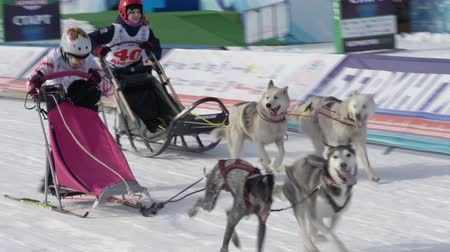 mushing : PETROPAVLOVSK KAMCHATSKY, KAMCHATKA PENINSULA, RUSSIA - FEBRUARY 21, 2019: Kamchatka Kids Competitions Dog Sled Racing Dyulin Beringia. Running dog sled young musher through stadium. Stock Footage