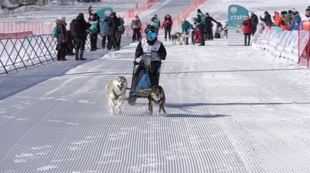 Male child mushing sled dog team, running on snowy race distance during Kamchatka Kids Competitions Sled Dog Race Dyulin Beringia. Petropavlovsk City, Kamchatka Peninsula, Russia - February 20, 2020