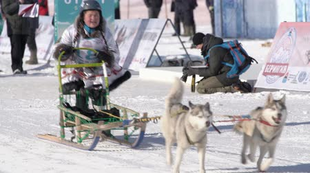 Female child mushing sled dog team, running on snowy race distance during Kamchatka Kids Competitions Dog Sled Racing Dyulin Beringia. Petropavlovsk City, Kamchatka Peninsula, Russia - Feb 20, 2020 Стоковые видеозаписи