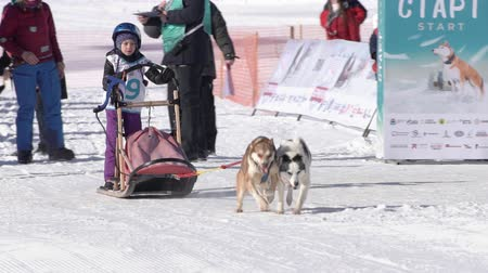 Girl mushing sled dog team, running on snowy race distance during Kamchatka Kids Competitions Sled Dog Race Dyulin Beringia. Petropavlovsk City, Kamchatka Peninsula, Russia - February 20, 2020
