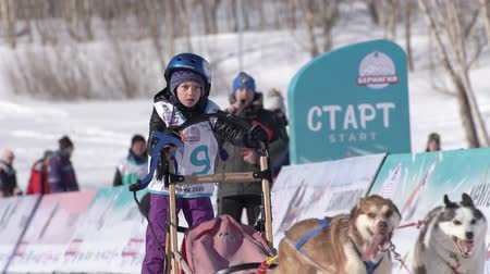 mushing : Female child mushing sled dog team, running on snowy race distance during Kamchatka Kids Competitions Sled Dog Racing Dyulin Beringia. Petropavlovsk City, Kamchatka Peninsula, Russia - Feb 20, 2020 Stock Footage
