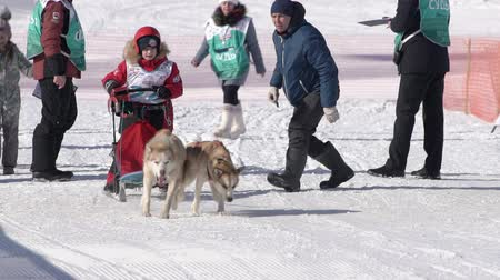 審判 : Child mushing sled dog team, running on snowy race distance during Kamchatka Kids Competitions Dog Sled Race Dyulin Beringia. Petropavlovsk City, Kamchatka Peninsula, Russia - February 20, 2020