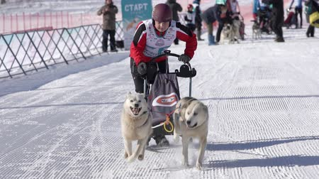 Boy mushing sled dog team, running on snowy race distance during Kamchatka Kids Competitions Dog Sled Racing Dyulin Beringia. Petropavlovsk City, Kamchatka Peninsula, Russian Far East - Feb 20, 2020