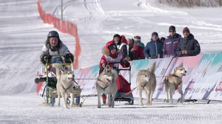 Children mushing sled dog team, running on snowy race distance during Kamchatka Kids Competitions Sled Dog Race Dyulin Beringia. Petropavlovsk, Kamchatka Peninsula, Russian Far East - Feb 20, 2020