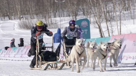 Two boys mushing sled dog team, running on snowy race distance during Kamchatka Kids Competitions Dog Sled Racing Dyulin Beringia. Petropavlovsk, Kamchatka Peninsula, Russian Far East - Feb 20, 2020 Стоковые видеозаписи