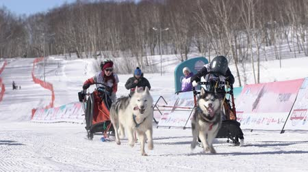 Children mushing sled dog team, running on snowy race distance during Kamchatka Kids Competitions Dog Sled Racing Dyulin Beringia. Petropavlovsk, Kamchatka Peninsula, Russian Far East - Feb 20, 2020.