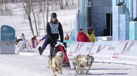 kutyák : Boy mushing sled dog team, running on snowy race distance during Kamchatka Kids Competitions Sled Dog Racing Dyulin Beringia. Petropavlovsk City, Kamchatka Peninsula, Russian Far East - Feb 20, 2020 Stock mozgókép
