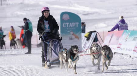 mushing : Girl mushing sled dog team, running on snowy race distance during Kamchatka Kids Competitions Sled Dog Race Dyulin Beringia. Petropavlovsk City, Kamchatka Peninsula, Russia - February 20, 2020