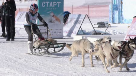 Girl mushing sled dog team, running on snowy race distance during Kamchatka Kids Competitions Sled Dog Racing Dyulin Beringia. Petropavlovsk City, Kamchatka Peninsula, Russia - February 20, 2020