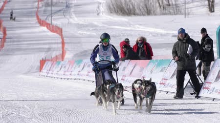 kutyák : Boy mushing sled dog team, running on snowy race distance during Kamchatka Kids Competitions Sled Dog Race Dyulin Beringia. Petropavlovsk City, Kamchatka Peninsula, Russian Far East - Feb 20, 2020