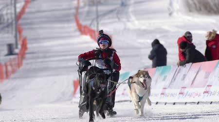 kutyák : Female child mushing sled dog team, running on snowy race distance during Kamchatka Kids Competitions Sled Dog Race Dyulin Beringia. Petropavlovsk City, Kamchatka Peninsula, Russia - February 20, 2020