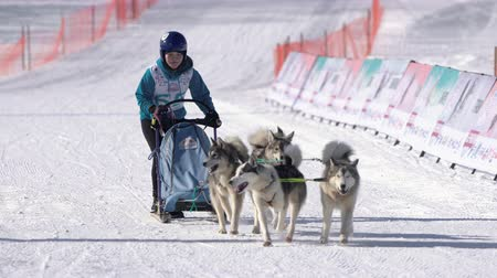 kutya : Girl mushing sled dog team, running on snowy race distance during Kamchatka Kids Competitions Sled Dog Racing Dyulin Beringia. Petropavlovsk City, Kamchatka Peninsula, Russia - February 20, 2020