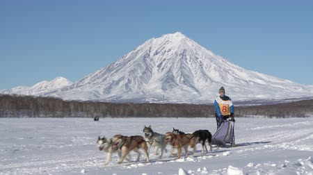 Female mushing sled dog team, running snow race distance Kamchatka traditional Sled Dog Race Championship Beringia on background of Koryak Volcano. Kamchatka Peninsula, Russian Far East - Feb 22, 2020