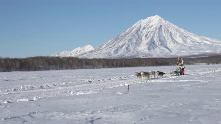 Female mushing sled dog team, running snow race distance Kamchatka traditional Sled Dog Racing Championship Beringia on background Koryak Volcano. Kamchatka Peninsula, Russian Far East - Feb 22, 2020