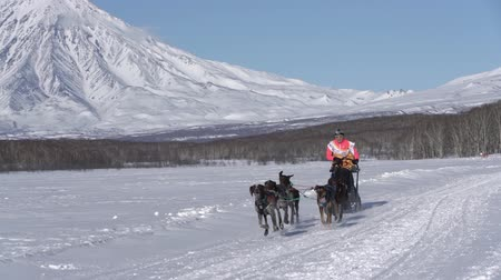 Female mushing sled dog team, running snow race distance Kamchatka traditional Sled Dog Racing Championship Beringia on background mountains. Kamchatka Peninsula, Russian Far East - February 22, 2020.