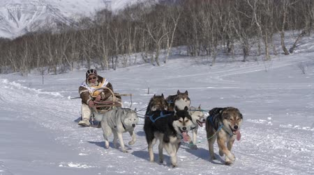 kutyák : Musher in traditional aboriginal clothes running husky sled dog team. Kamchatka traditional extreme Sled Dog Race Championship Beringia. Kamchatka Peninsula, Russian Far East - February 22, 2020.