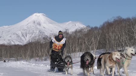 Male mushing sled dog team, running snow race distance Kamchatka traditional Sled Dog Racing Competition Beringia on background Avacha Volcano. Kamchatka Peninsula, Russian Far East - Feb 22, 2020.