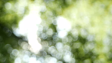 Nature defocused of sunlight  through the lush leaves of trees in spring or summer at morning. Defocused bokeh lights. Abstract natural. Dostupné videozáznamy