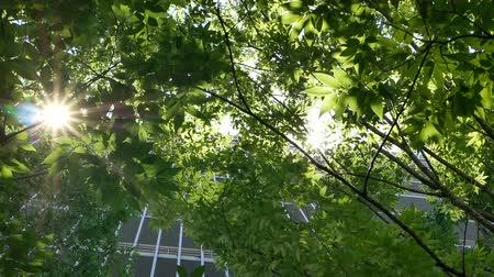 through leaves : Sunlight through the lush leaves of trees, Uprisen angle view of fresh tree foliage. freshness of spring or summer nature seasonal.