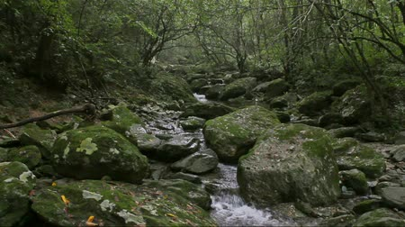 cisza : The quiet dark dense jungle with clear stream water flows