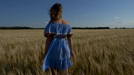 spiga di frumento : beautiful girl walks across field of ripe wheat.
